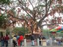 新界林村许愿树
