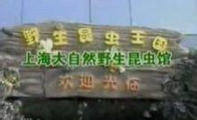上海野生昆虫馆