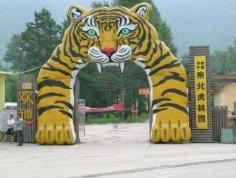 东北虎林园   图片