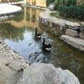 香邑溪谷 景观园林 小区实景