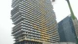 梧桐树大厦