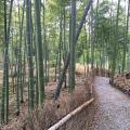 五峰山枫林山居 景观园林