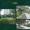 雅居乐·御龙山 景观园林