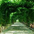 北戴河富力和园 景观园林