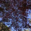 桃花溪避暑度假小镇 景观园林