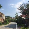 富力南昆山 景观园林