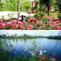 中洲花溪樾 景观园林 中洲花溪越小区景观