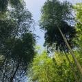金洲國際 景觀園林
