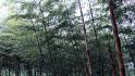 釜山卧龙公园