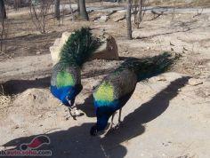 八达岭野生动物园图片