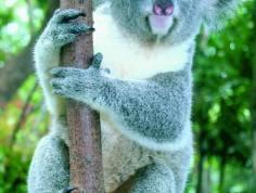 香江野生动物世界图片