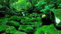 十万大山国家森林公园