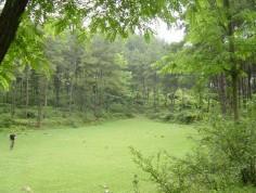 白云公园图片