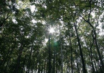 黔灵公园图片