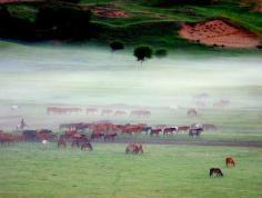 坝上草原图片