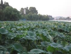 玄武湖图片