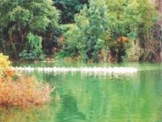 红叶谷生态文化旅游区图片