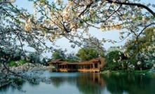 上海淀山湖梅园