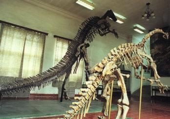 禄丰恐龙博物馆图片