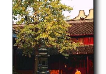 龙华寺图片