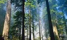 千岛湖森林氧吧