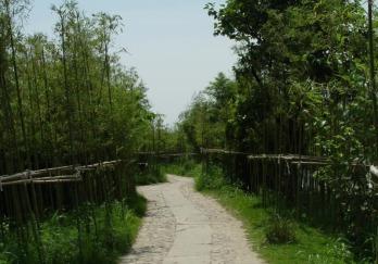 西溪湿地图片