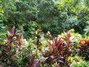 热带雨林博物馆